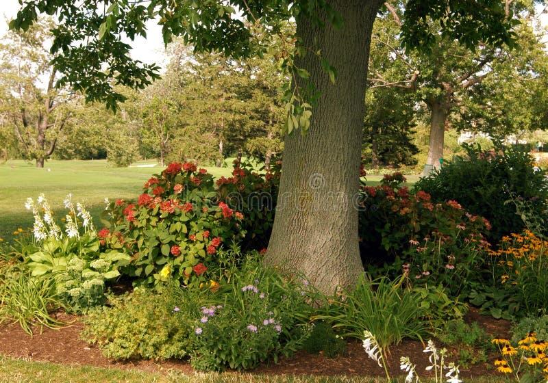 Baum umgeben durch Blumen lizenzfreies stockfoto