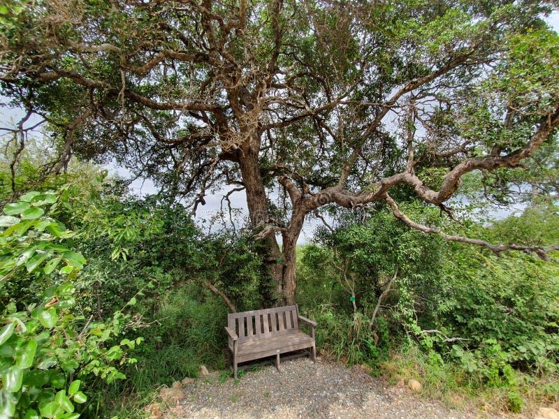 Baum und Bank lizenzfreies stockbild