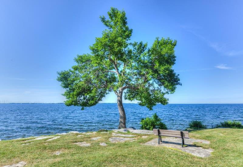 Baum und Bank in MacDonald Park, Kingston, Kanada stockbilder