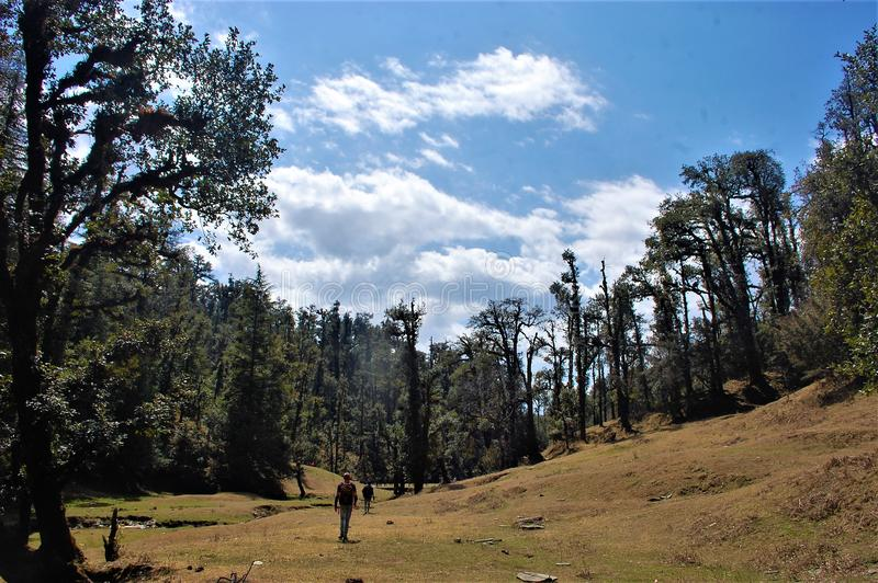 Baum und Berg und dunkler Wald mit Himmelhintergrund lizenzfreie stockbilder