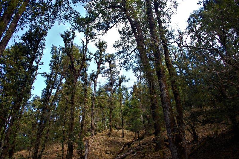 Baum und Berg und dunkler Wald mit Himmelhintergrund lizenzfreies stockfoto