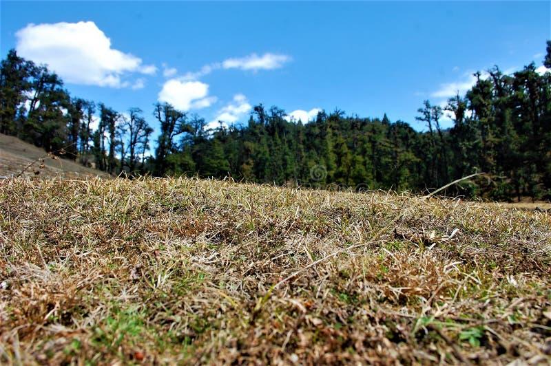 Baum und Berg und dunkler Wald mit Himmelhintergrund lizenzfreies stockbild