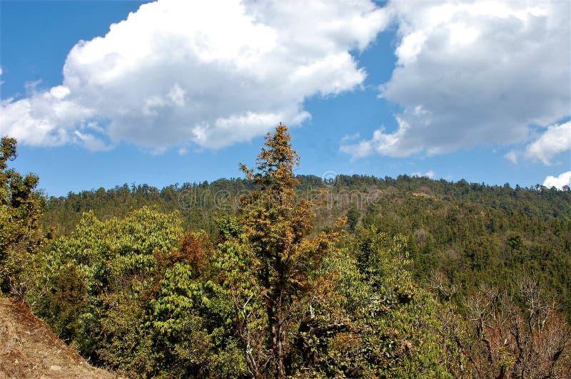 Baum und Berg und dunkler Wald mit Himmelhintergrund lizenzfreie stockfotografie