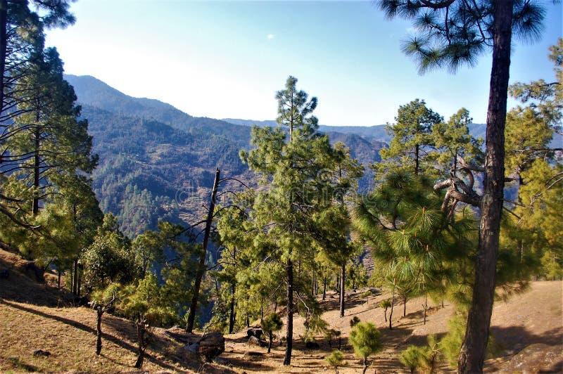 Baum und Berg und dunkler Wald mit Himmelhintergrund lizenzfreie stockfotos