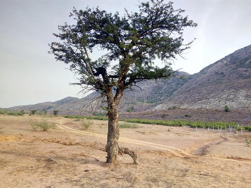 Baum und Berg von CG stockbilder
