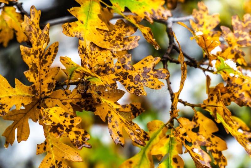 Baum und Blätter während des Fallherbstes nach Regen lizenzfreies stockfoto