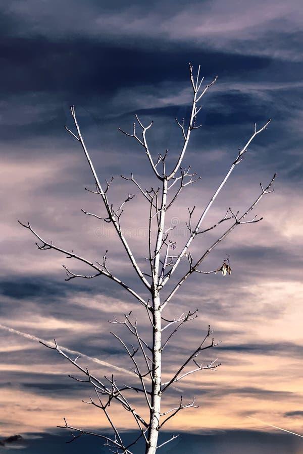 Download Baum und blauer Himmel stockbild. Bild von betrieb, nave - 106800777