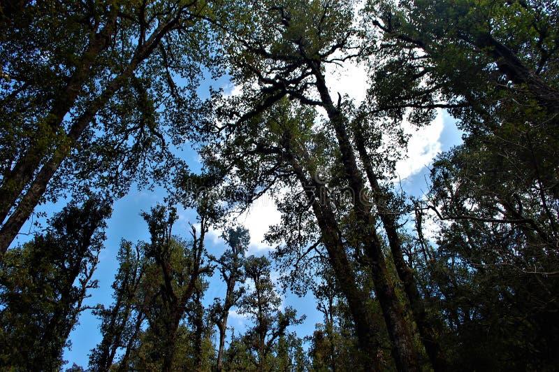 Baum und dunkler Wald mit Himmelhintergrund stockbilder