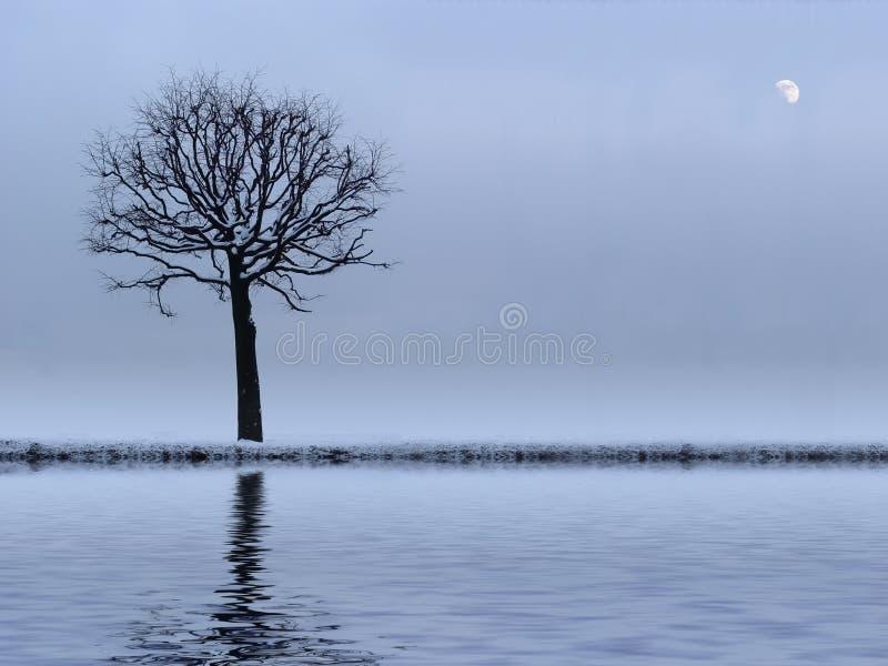 Baum und Fluss stockfotos