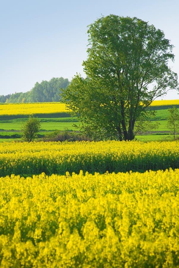 Baum und gelbe Blumen auf Wiese stockbild