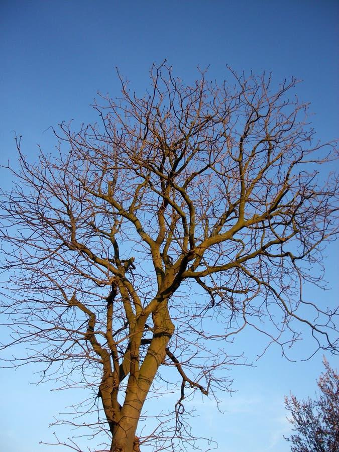 Baum und Himmel 9 lizenzfreies stockbild