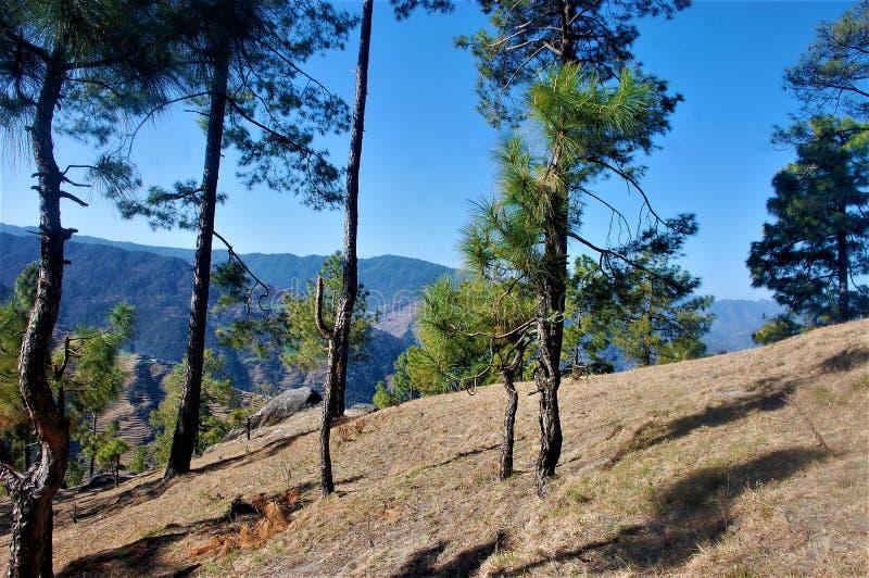 Baum und Himmel, die Schönheit der Natur mit schöner Landschaft zeigen stockbilder