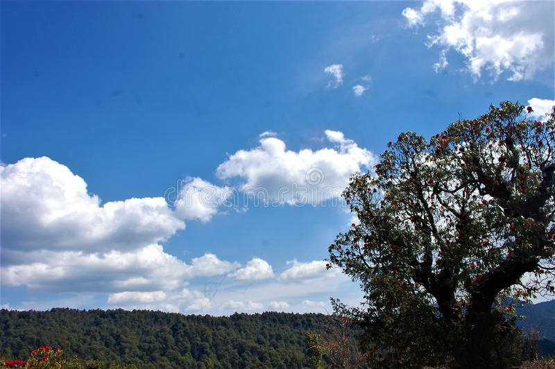 Baum und Himmel, die Schönheit der Natur mit schöner Landschaft zeigen stockfoto