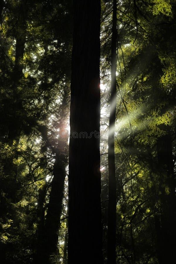 Baum und Leuchte lizenzfreie stockfotos
