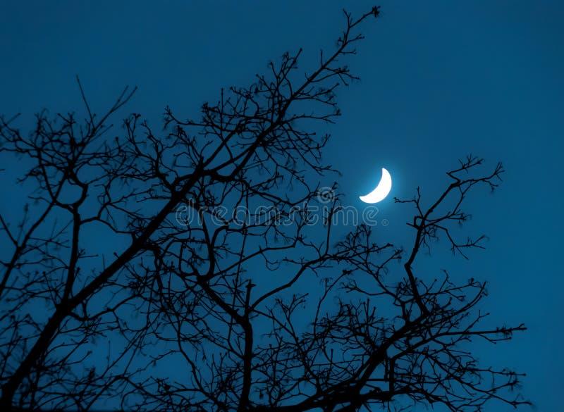 Baum und Mond lizenzfreie stockfotografie