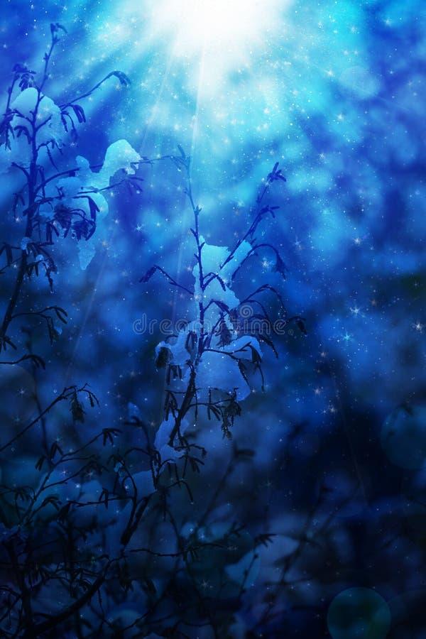 Download Baum Und Schnee In Der Winternacht Stockbild - Bild von leuchte, szene: 106800771