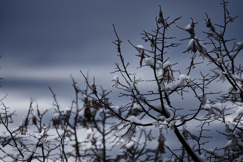 Download Baum Und Schnee In Der Winternacht Stockbild - Bild von nacht, blau: 106800793