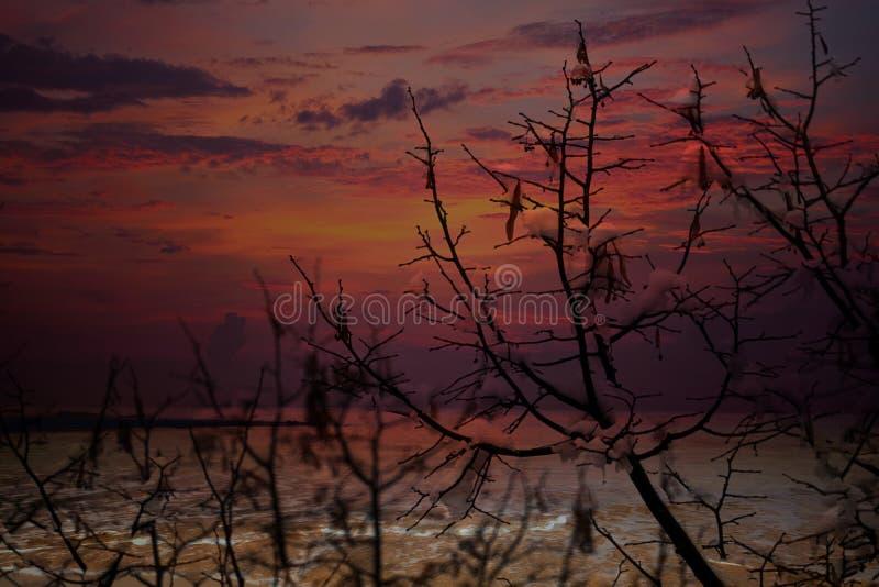 Download Baum Und Schnee In Der Winternacht Stockfoto - Bild von nave, abend: 106801292