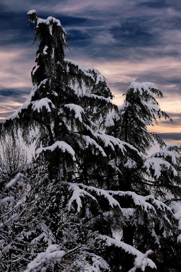 Download Baum Und Schnee In Der Winternacht Stockbild - Bild von baum, blau: 106801349