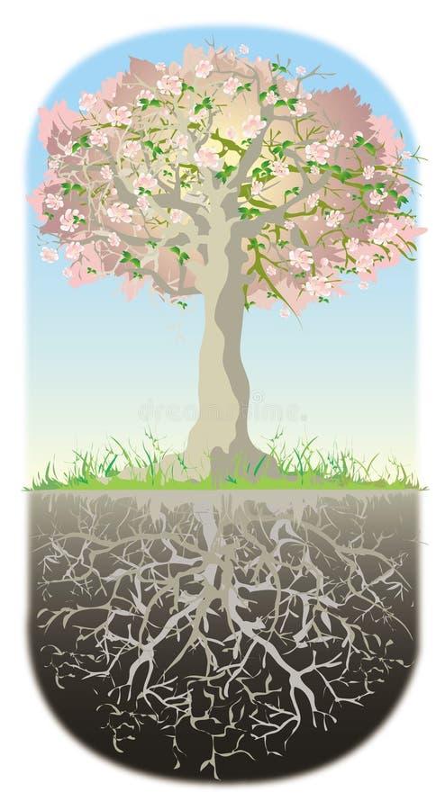 Baum und seine Wurzeln vektor abbildung