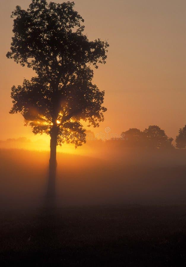 Baum und Sonne lizenzfreie stockfotos