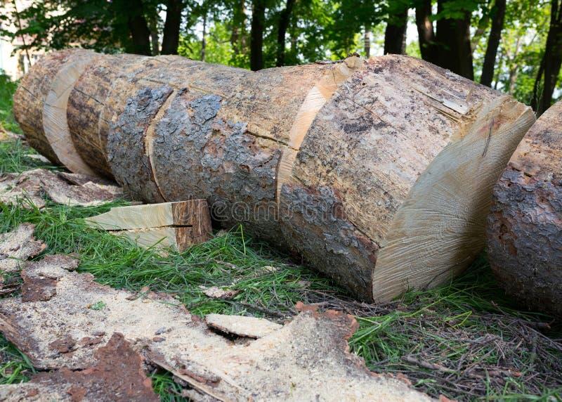 Baum und Stummel auf Sägemühlenabschluß oben lizenzfreie stockbilder