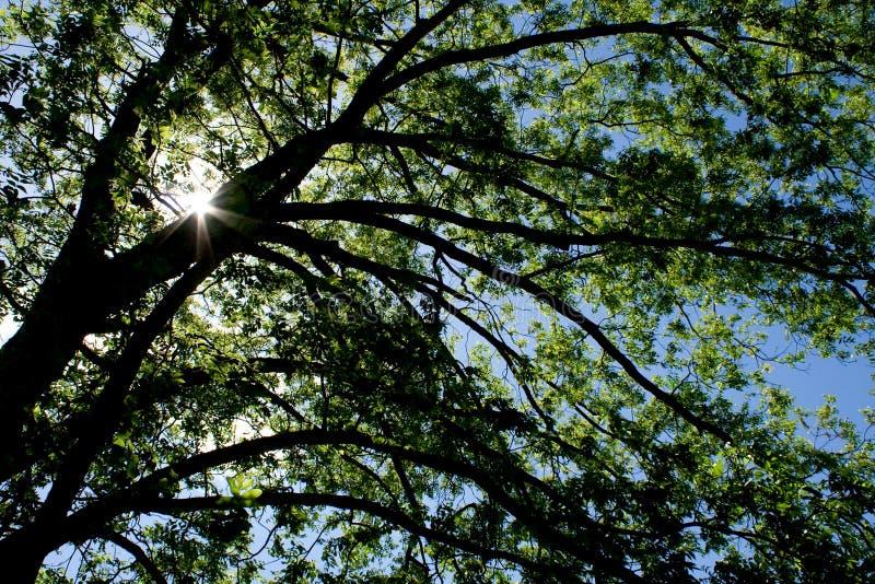 Baum und Tageslicht lizenzfreies stockfoto