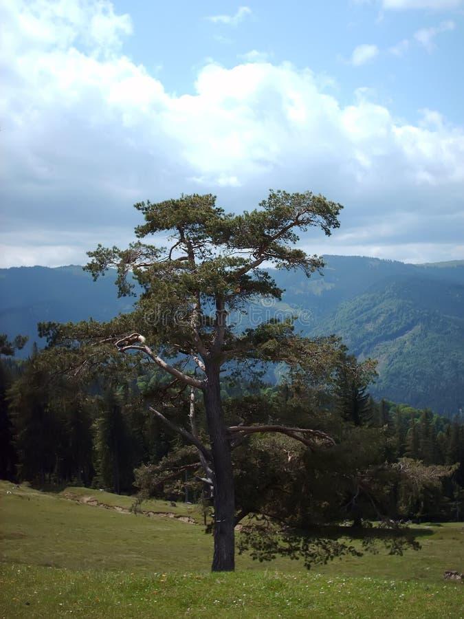 Baum und Wald stockbild