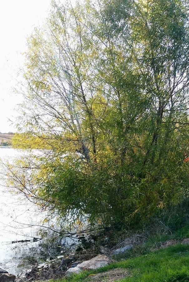 Baum und Wasser lizenzfreies stockfoto