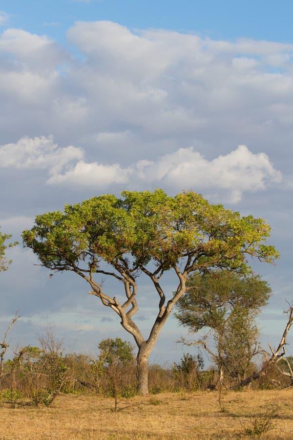 Baum und Wolken stockfoto