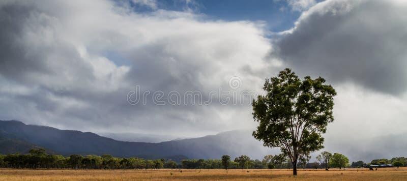 Baum und Wolken stockfotos