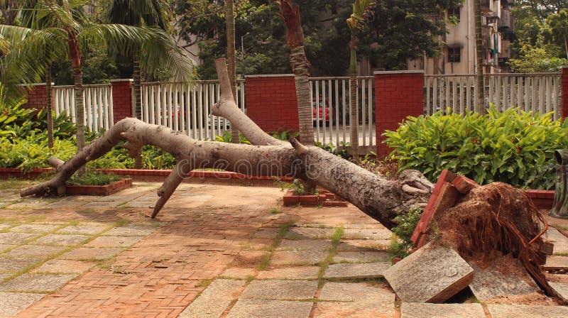 Baum unten am Park stockfotos