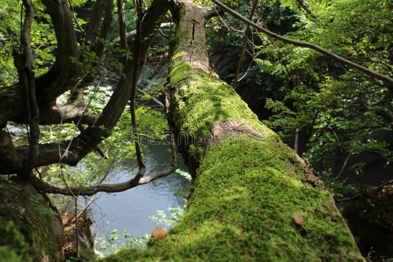 Baum unter watter lizenzfreie stockbilder