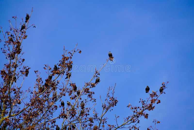 Baum voll der Vögel stockfotos