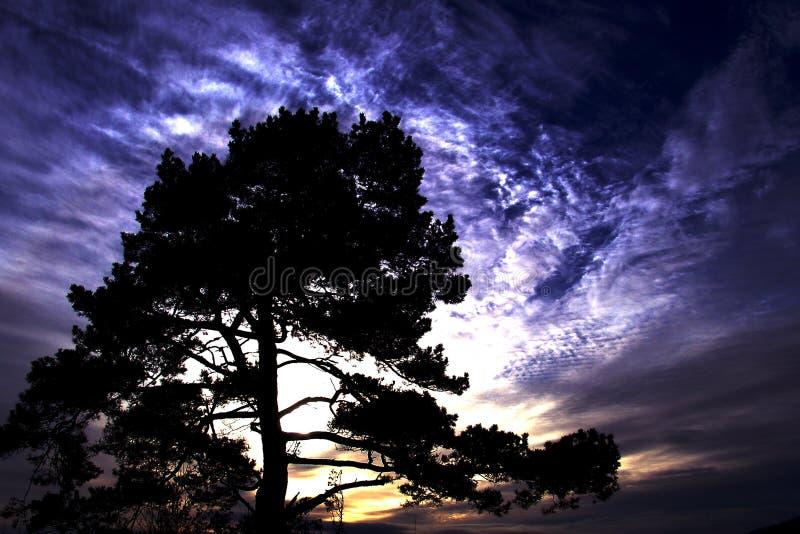 Baum von Eden stockfotos