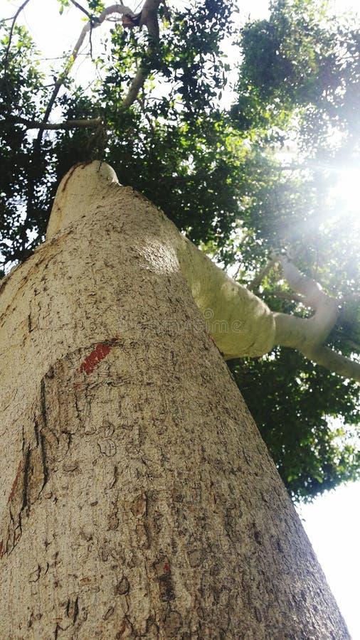 Baum von unterhalb lizenzfreies stockbild