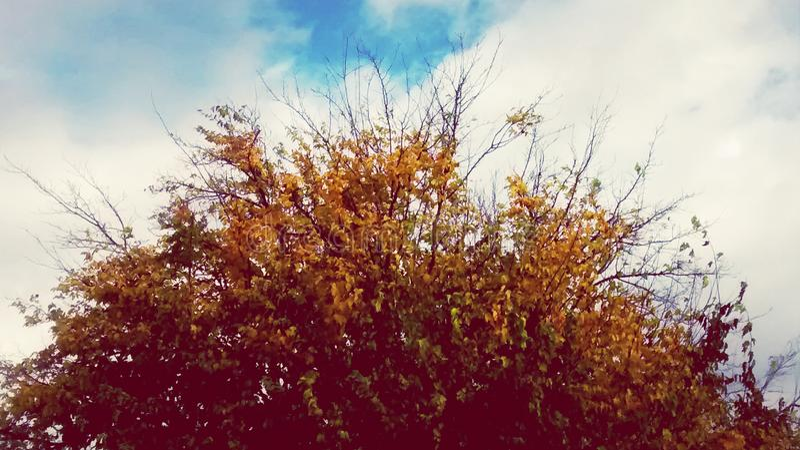 Baum vor einem Morgenhimmel lizenzfreies stockbild