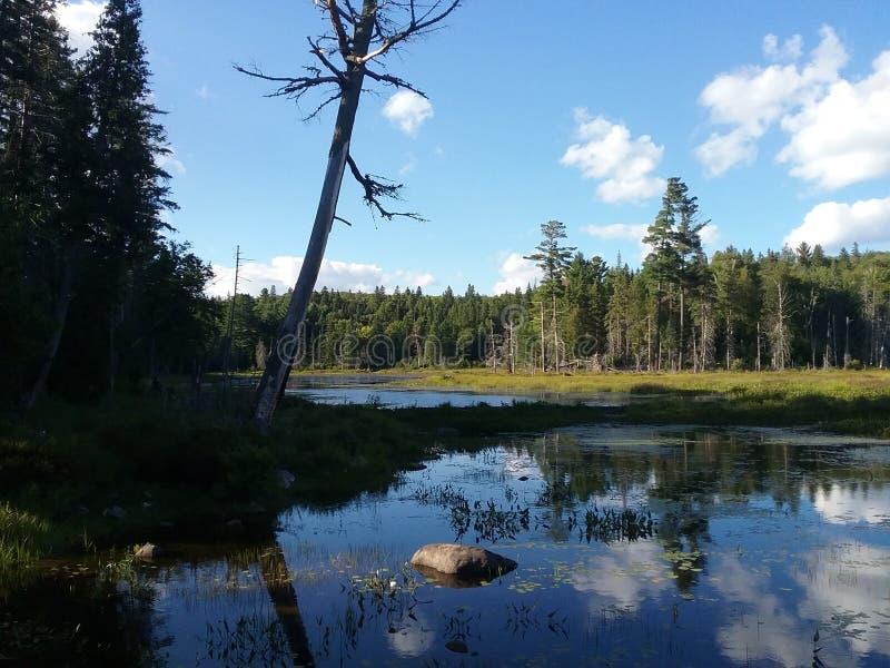 Baum vor See im Algonquin-Park stockfotos