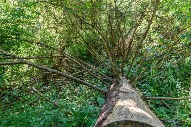 Baum Walddes verringerns lizenzfreie stockbilder
