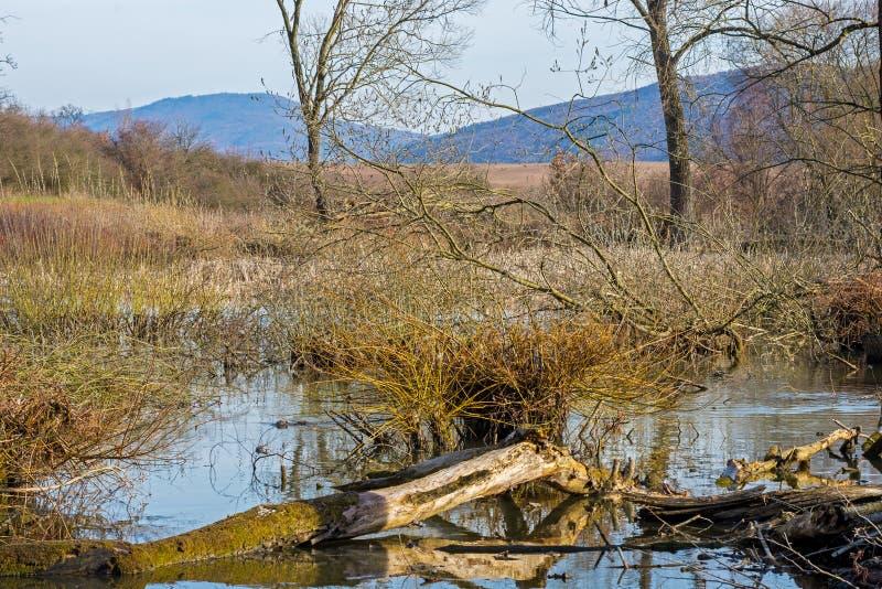 Baum, Weide gefallen in den See und blauer Himmel stockbild