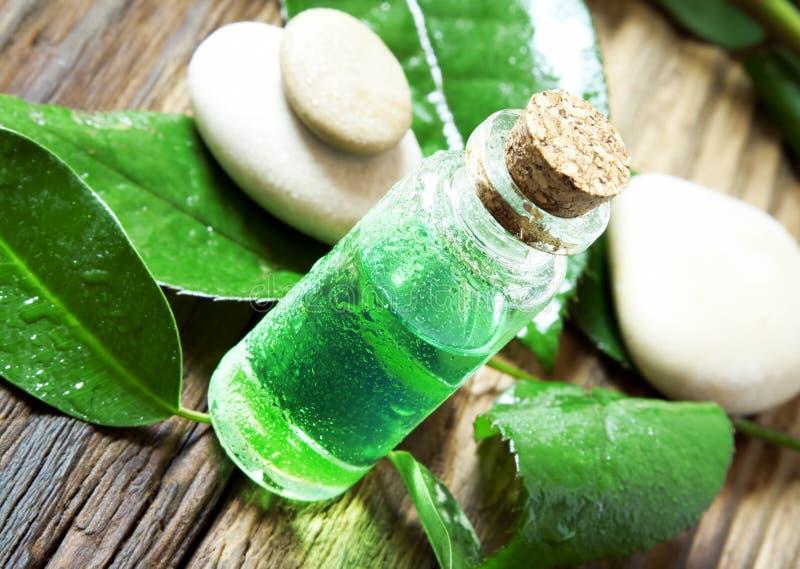 Baum-Wesentliches des ätherischen Öls Bottle.Tea lizenzfreies stockfoto