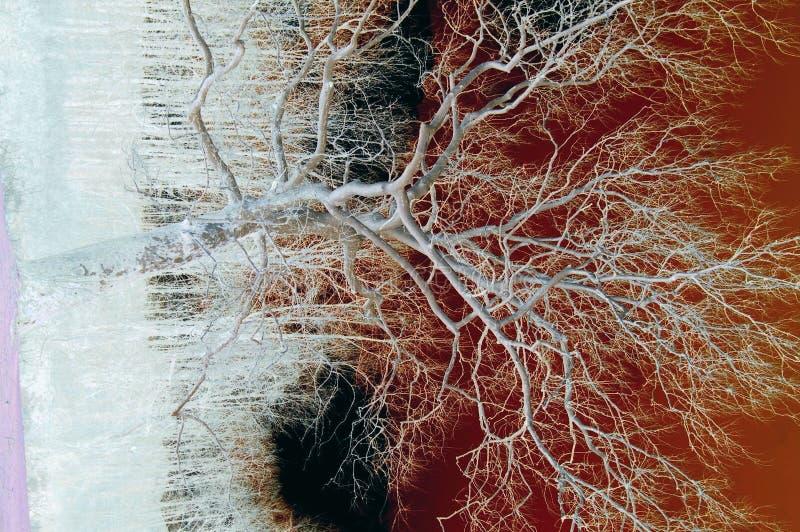 Baum withGlow lizenzfreies stockfoto