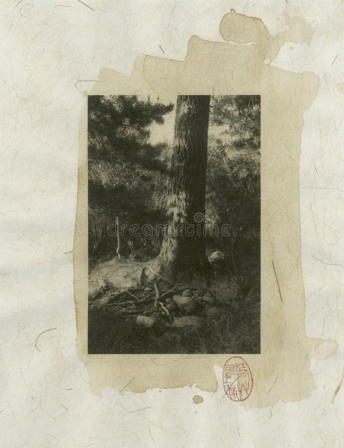 Baum-Wurzeln stock abbildung