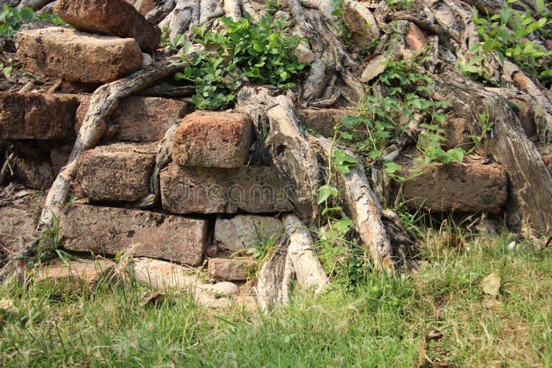 Baum-Wurzeln auf alter Pagoden-Basis lizenzfreie stockbilder