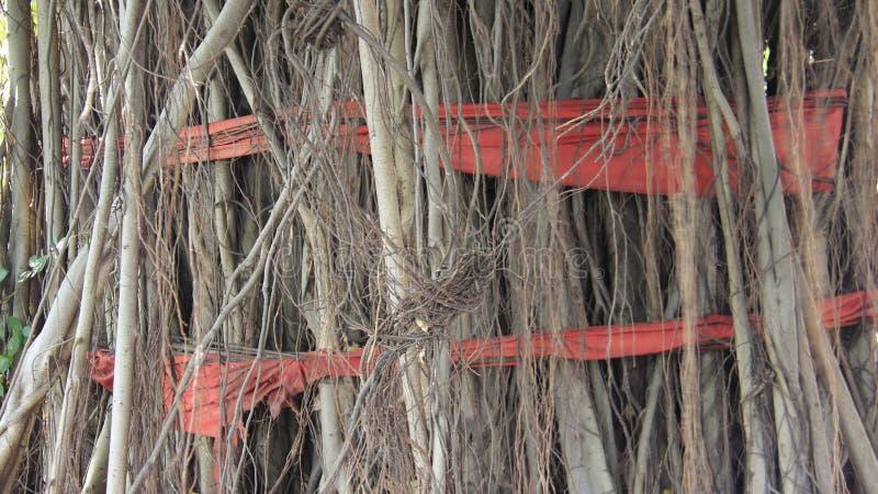 Baum-Wurzeln mit rotem Stoff stockbilder