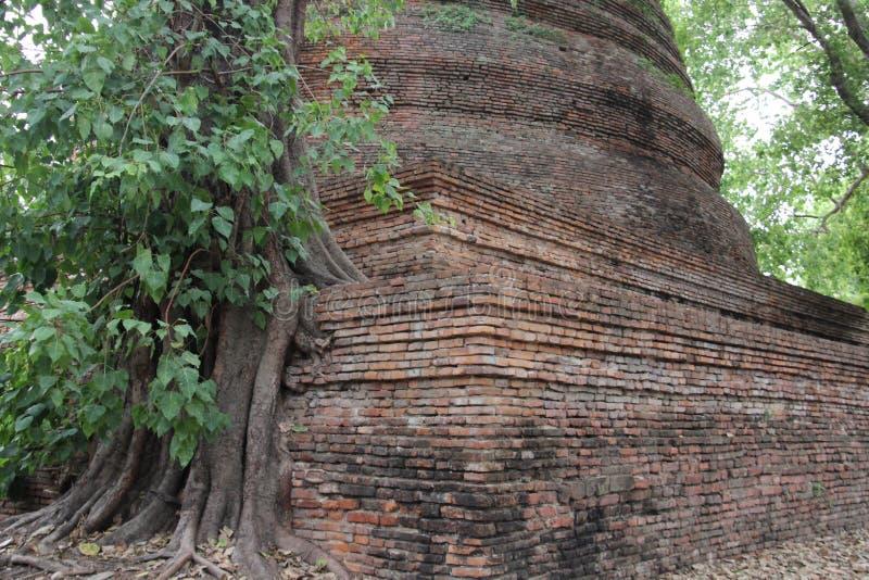Baum-Wurzeln und Baumrinden mit altem Stupa stockfotos