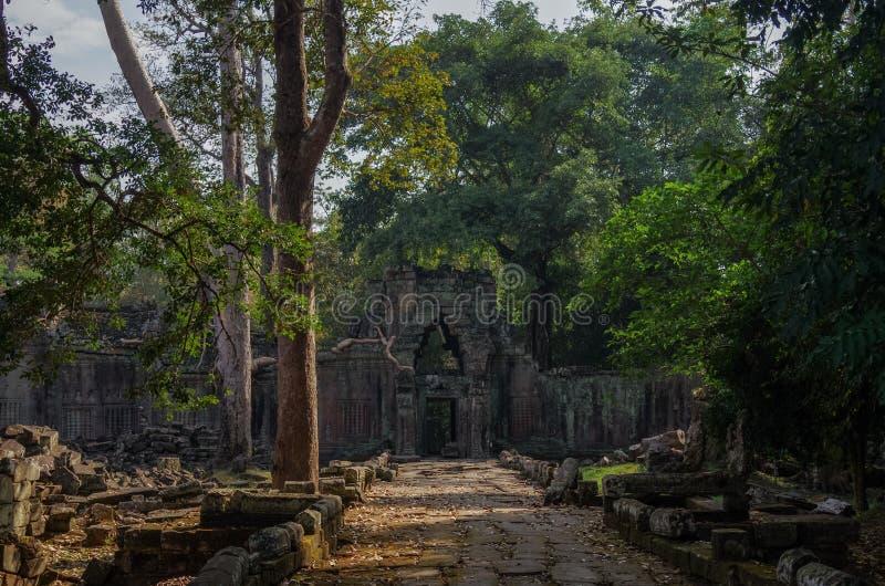 Baum wurzelt das Wachsen durch die Ruinen von Tempel Ta Prohm bei Angko stockbilder