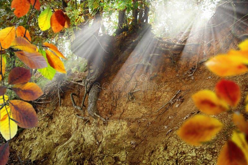 Baum wurzelt Lichtstrahlen lizenzfreie stockfotos