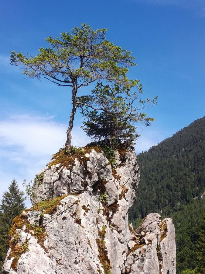 Baum-Zoom stockbilder