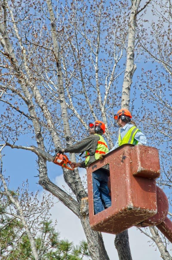Baum-Zutat und Glied-Abbau von einem Eimer-LKW lizenzfreies stockfoto